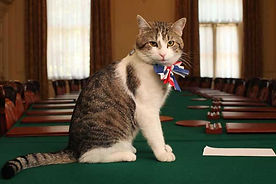 Larry_Chief_Mouser.jpg