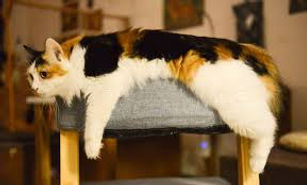 sick cat 1.jpg