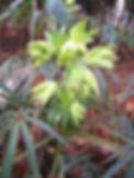 Connaître les propriétés magiques de nos plantes locales.