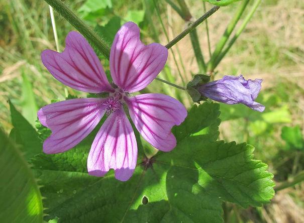 Visitez mon blog Facebook et abonnez-vous pour suivre au plus près la brûlante actualité des plantes comestibles au fil des saisons !