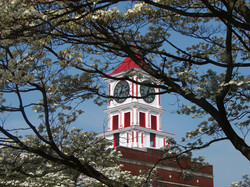 Town Clock with Dogwood 4-08