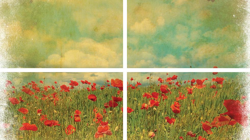 Dixie Belle Transfer Field of Flowers