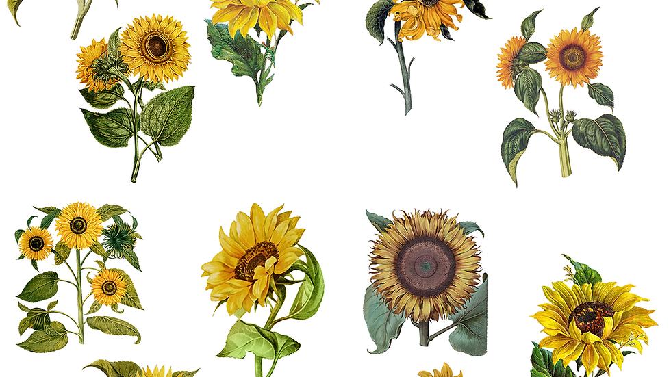 Dixie Belle Transfer Sunflower