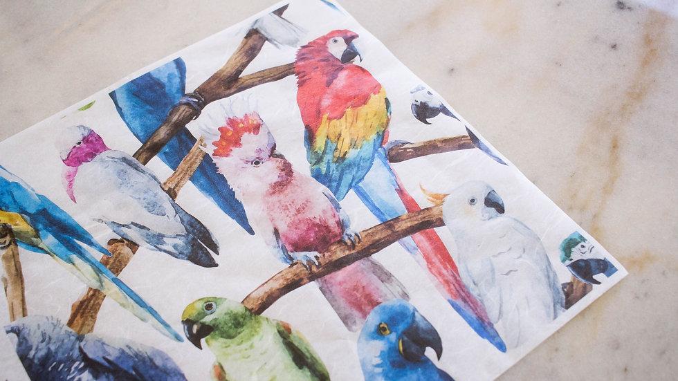 Dixie Belle Birds Deco Paper
