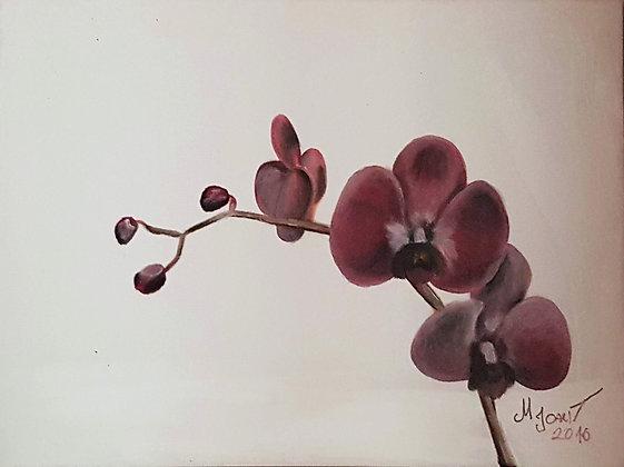"""Orhidee"" Maiki Joakit"