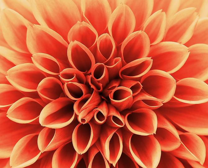 blossom-plant-flower-petal-bloom-red-102