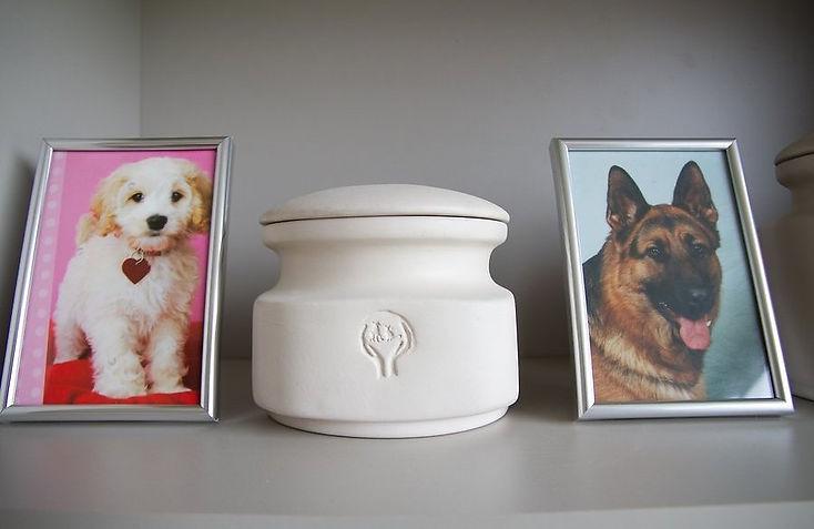Кремация животных.jpg