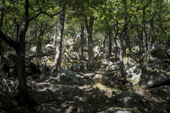 Forêt Communale de Wintzenheim de Herzog en Alsace au dessus du village de Wettolsheim Reproduction interdite - 2020