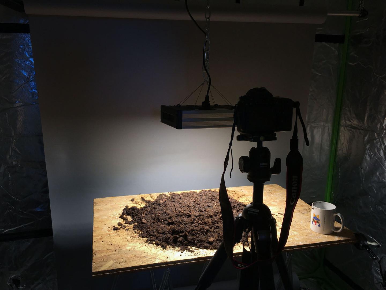 Time-Lapse d'une courgette
