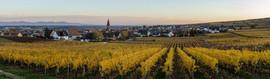 Balade dans les vignes à Wettolsheim Reproduction interdite