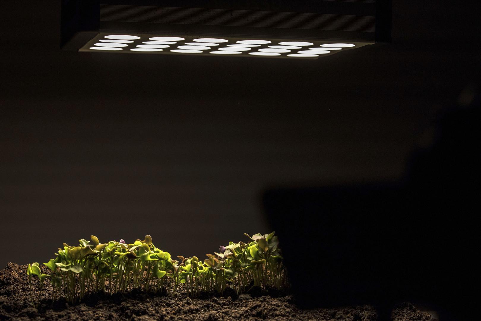 Time-Lapse d'un Chou Kale