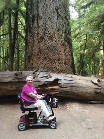 Sandra Hobson on her scooter posed in front of a giant cedar tree in Cathedral Grove