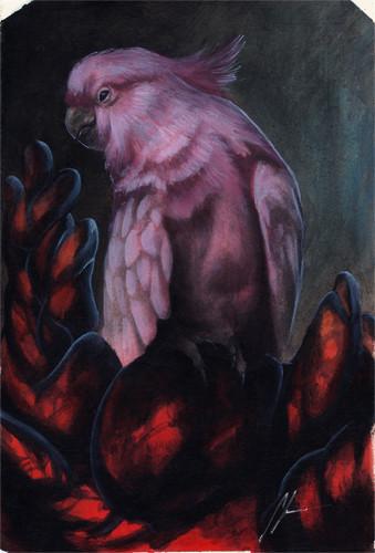 Cockatoo Texture study