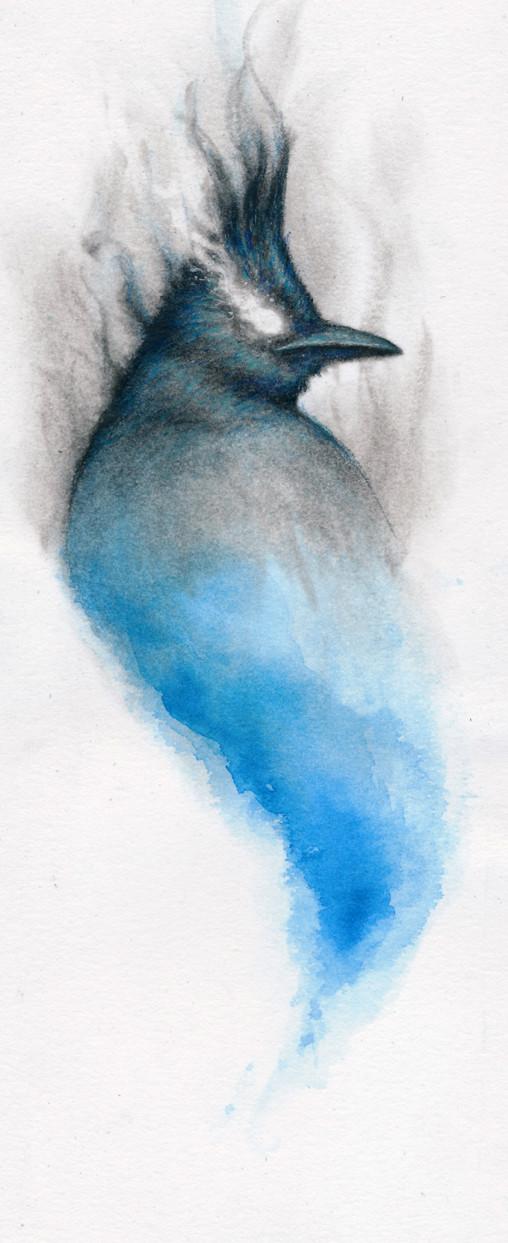 Smokey Stellar Jay