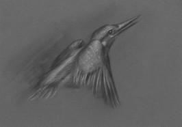 EFE bird study 2