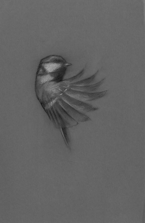 EFE bird study 3