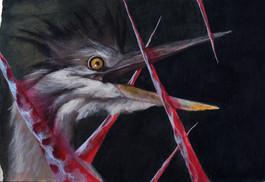 Heron and Texture study
