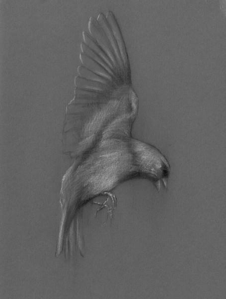 EFE bird study 1