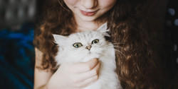LexyPro Cat