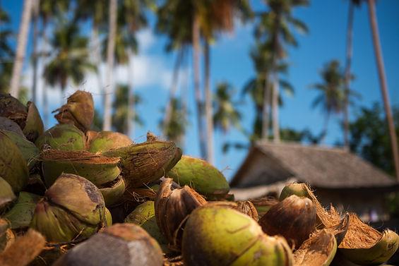 Coconut Oil Manufacturer