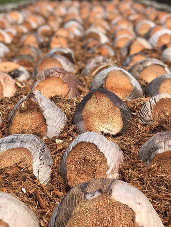 coconutseed01.jpg
