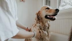 Dog Showering.jpg