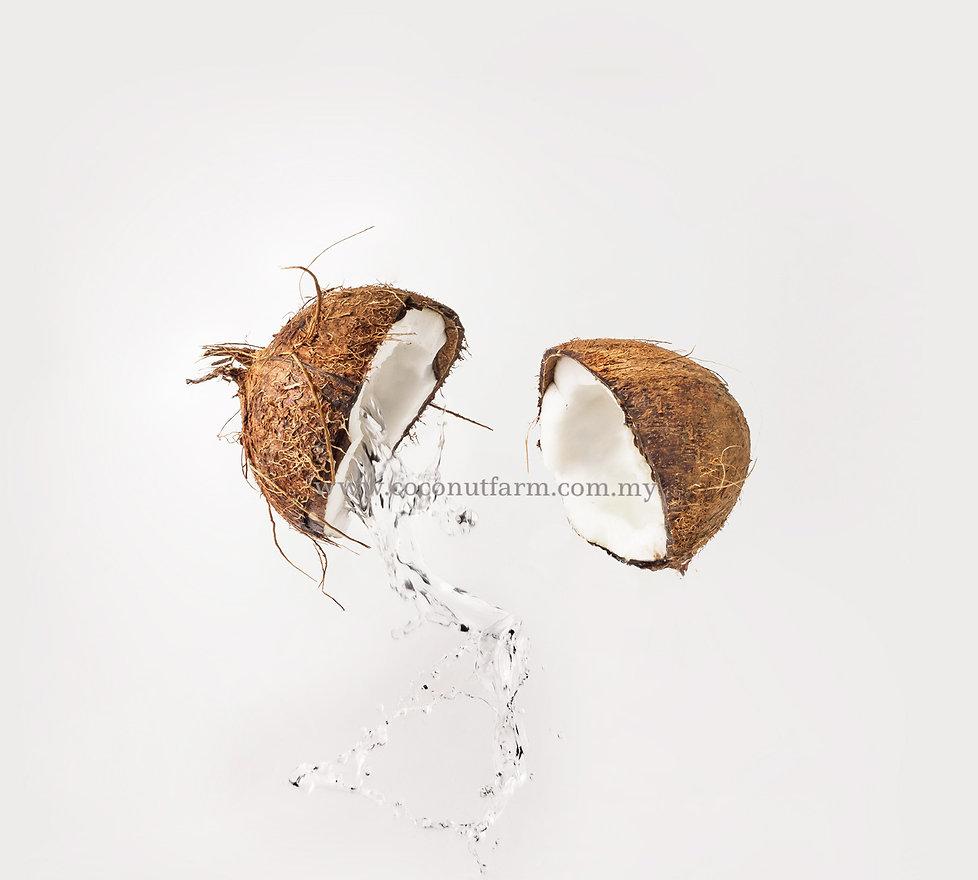 coconutfarm.cm.my