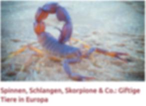 skorp_spin_eu.png