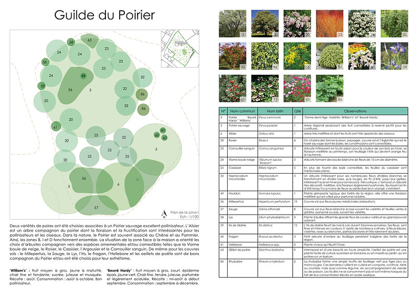 2021 06 29 Plan jardin page carnet.jpg