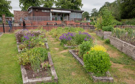 Ashton Community Garden.jpg