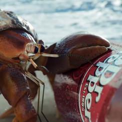 Dr Pepper 'Hermit Crab'