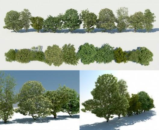 treesketch_testkizo-528x430