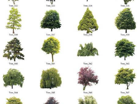 Biblioteca de árvores para maquete eletrônica