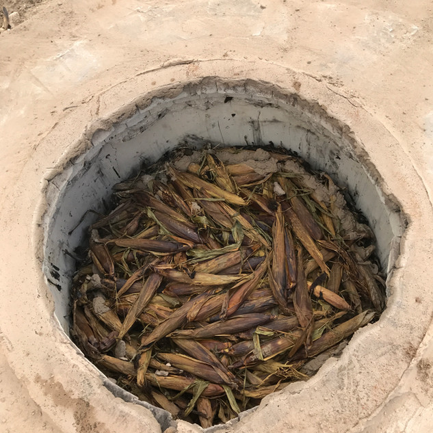 Steamed corn in the pit