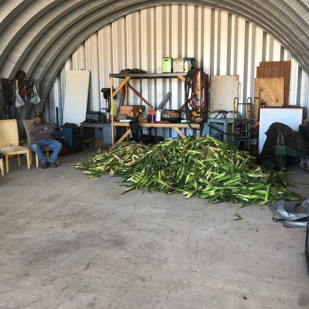Picked Corn