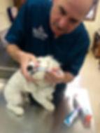 Thompson Animal Medical Center | Vet Clinic | Animal Hospital | Dental Health | La Crosse