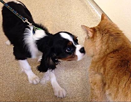 Thompson Animal Medical Center   Vet Clinic   Animal Hospital    Pet Boarding   La Crosse