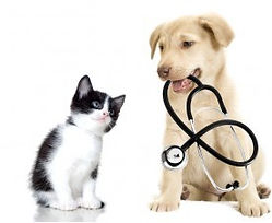 Stethoscop-puppy-and-kitten-300x226.jpg
