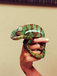 Thompson Animal Medical Center | Vet Clinic | Animal Hospital | Reptile Vet | La Crosse