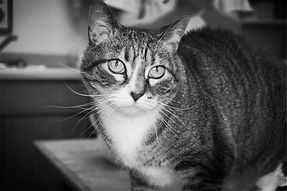 Thompson Animal Medical Center | Vet Clinic | Animal Hospital | Cat Vaccinations | Dog Vaccinations |  Pet Boarding | La Crosse| La Crosse