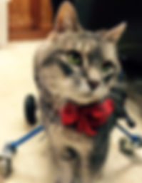 Turbo   Thompson Animal Medical Center   Vet Clinic   Animal Hospital    Pet Boarding   La Crosse