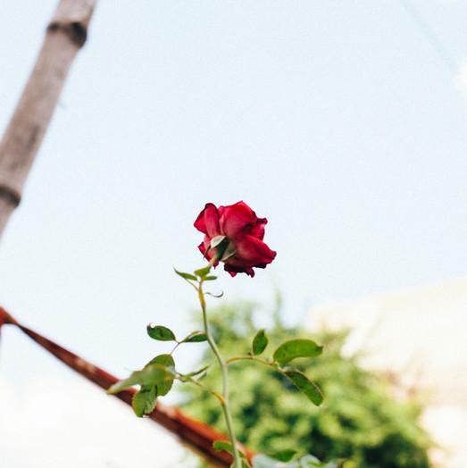 Flowers Photography by Koshboo Sahani.
