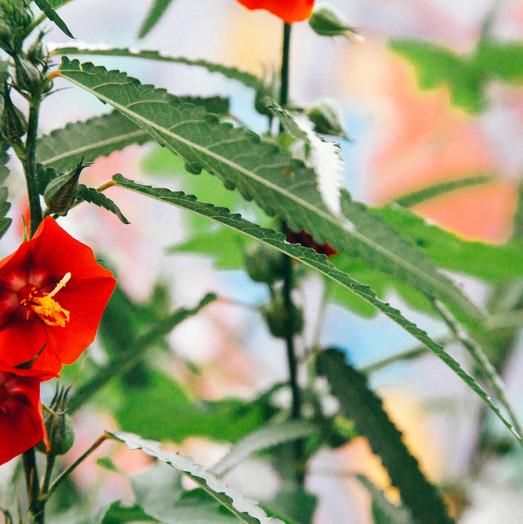 New Flowers - Photography by Krishna Jha