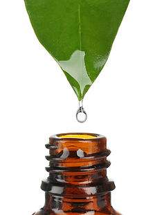 Essential oil dropping from green leaf i