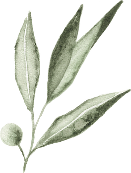 olive_watercolor_14.png