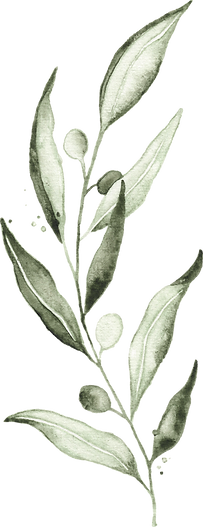 olive_watercolor_04.png