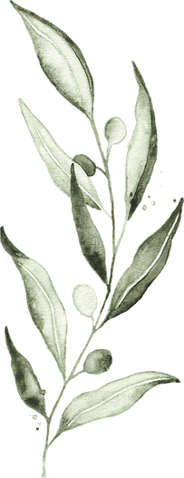 olive_watercolor_04_edited.png