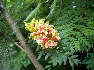 Fuinque flor.jpg