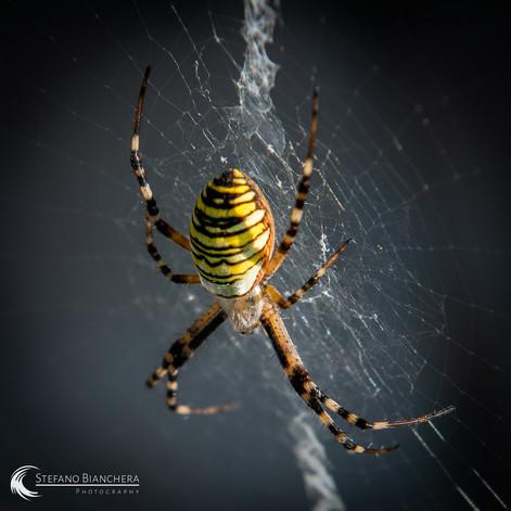 Gast auf meiner Terrasse