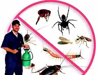 شركة مكافحة حشرات بعرعر ,شركة رش  حشرات بعرعر ,شركة مكافحة حشرات بسكاكا الجوف ,شركة رش  حشرات  بسكاكا الجوف